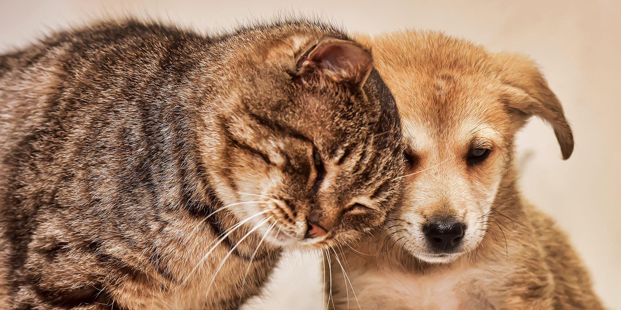 pouze mokrá kočička