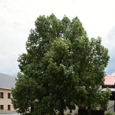 Pomník Karla Klostrmanna