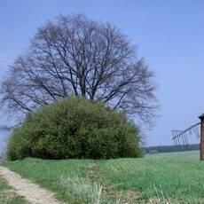 Mlýn v Chvalkovicích