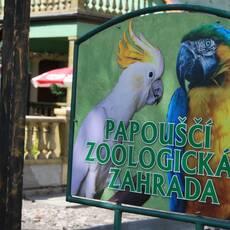 Papouščí Zoologická zahrada