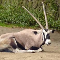 Safari park Dvůr Králové