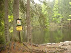 Boubínská rozhledna a prales