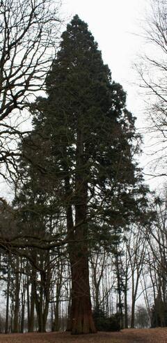 Ratměřice - Park a sekvojovce