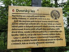 Dvorský les