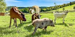 Procházka s lamou a piknik v parku se zvířátky