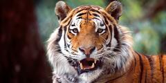 VIP prohlídka ZOO Tábor pro 4 milovníky zvířat