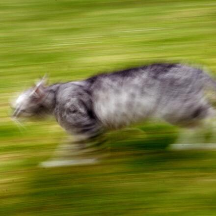 Rozmazaná fotka vzniká kvůli špatně nastavenému expozičnímu času.