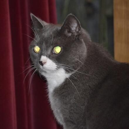 Interní neboli zabudovaný blesk může u lidí i zvířat způsobit červené či žlutě zbarvené oči.