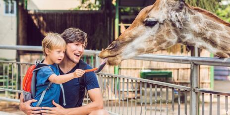 50 oblíbených zoo a zookoutků po celém Česku
