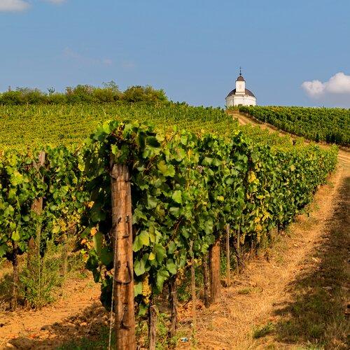 Vinařská oblast Tokaj