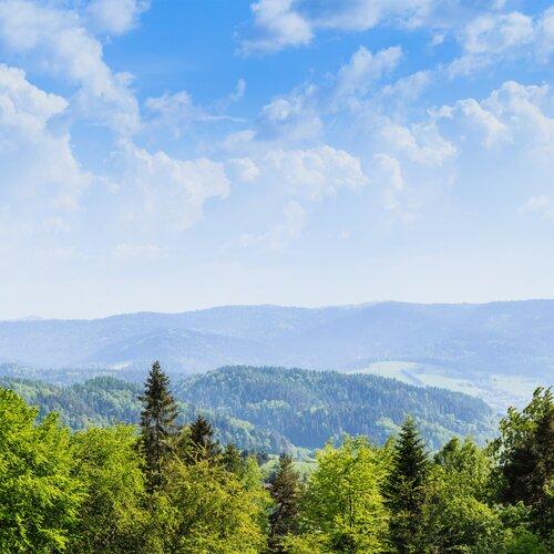 Stezka korunami stromů Krynica-Zdrój