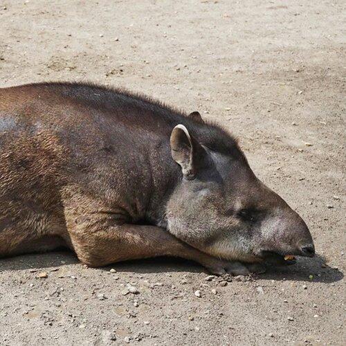 Zoo Xantus János Állatkert v Győru