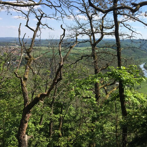 Brdatka: stezka přírodou u Křivoklátu