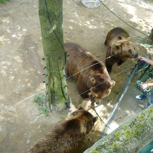 Medvědárium v Berouně a rozhledna