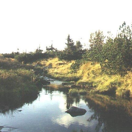 Pančavská louka