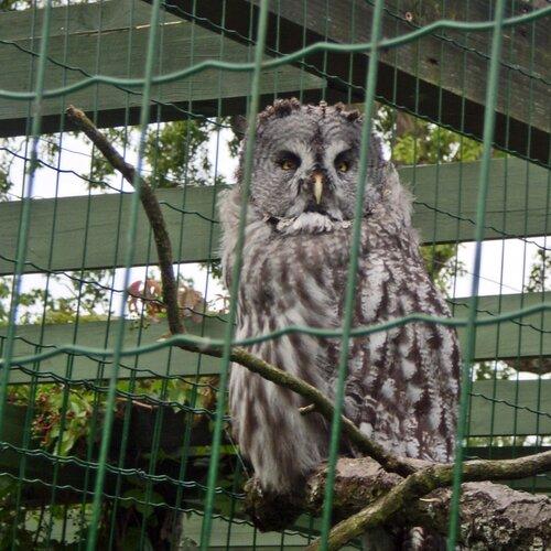 Zoo Hluboká nad Vltavou