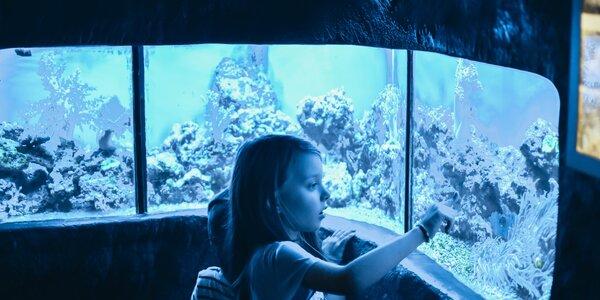 Mořský svět v Praze: nakrmte piraně a dejte si pozor na žraloky
