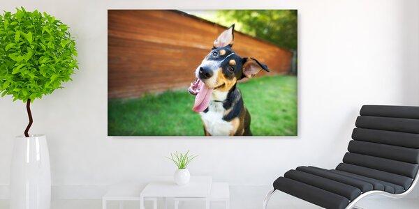Fotoobraz na plátně Klasik nebo Premium