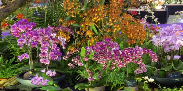Drážďany: Výstava orchidejí, velikonoční veletrh