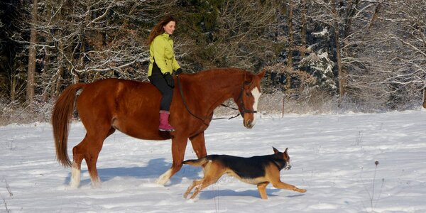 Vyjížďka na koni do přírody: 1 či 2 hodiny v sedle