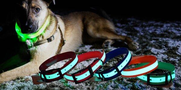 Bezbateriové svítící obojky pro psy: 5 velikostí