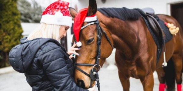 Zážitkový pobyt u koní pro 1 či 2 osoby