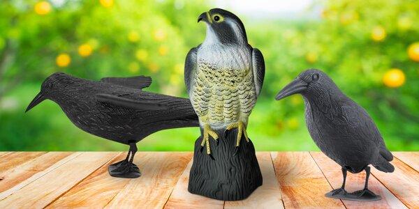 Makety havranů a sokola na odpuzování holubů