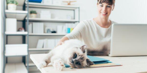 Home office: jak být při práci z domova efektivní a nezbláznit se?