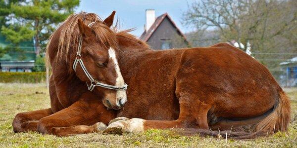 Příspěvek na pomoc zanedbaným a týraným koním