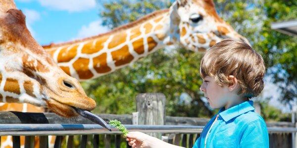 Zájezd na safari ve Dvoře Králové a noc mezi zvířaty