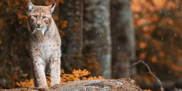 Kurz focení divoké přírody v NP Bavorský les
