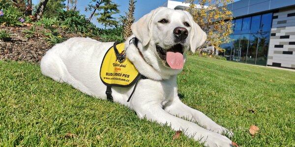 Přispějte na výcvik vodicích psů pro nevidomé