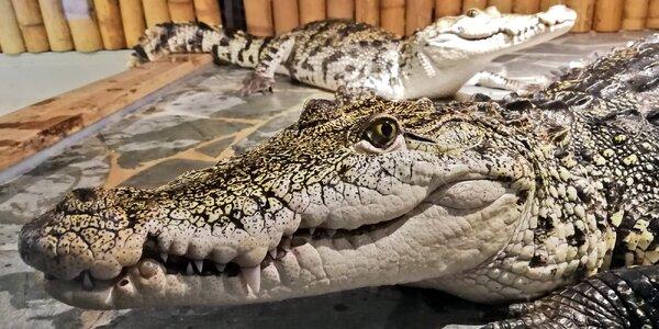 Vstupenka do Krokodýlí Zoo Praha pro dospělého