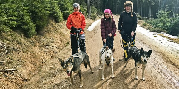 Dogtrekking: procházka s huskym po Jizerkách