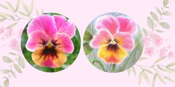 Online kurz Maceška pastelem snadno a krásně