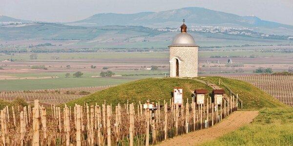 Vinařský pobyt pro dva ve Velkých Pavlovicích