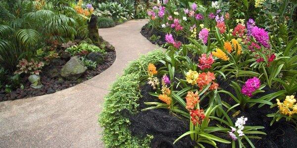 Výstava orchidejí v Rakousku s odjezdem z Brna