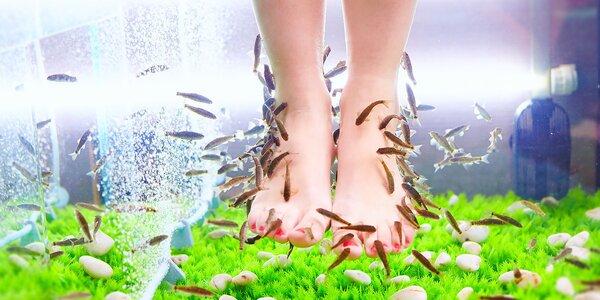Koupele nohou s mazanými rybkami Garra rufa
