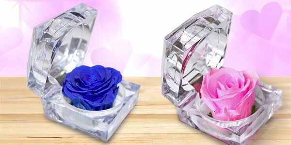 Originální dárek pro radost-stále čerstvá růže
