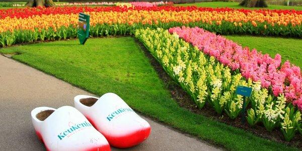 Tulipány v parku Keukenhof, sýry a Amsterdam