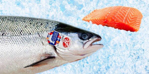 Čerstvý losos ze Skotska: Steaky s certifikátem