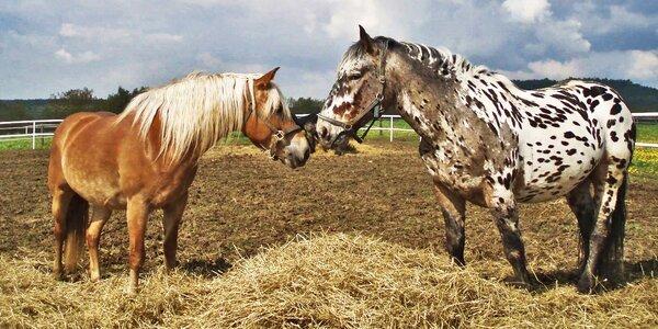 Vzhůru na statek: Jízda na koni a oběd pro dva