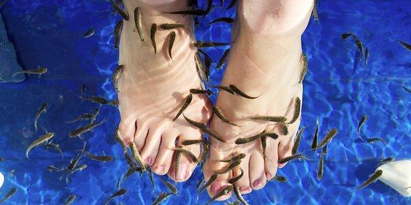 Koupel pro vaše nožky s rybkami Garra Rufa