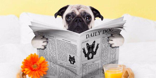 Péče o vašeho hafana: Jeden den v psím hotelu