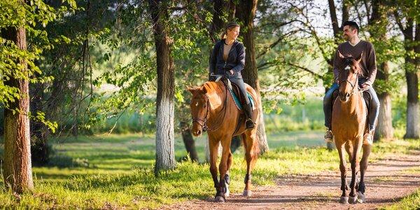 60 minut v koňském sedle: vyjížďka i výuka