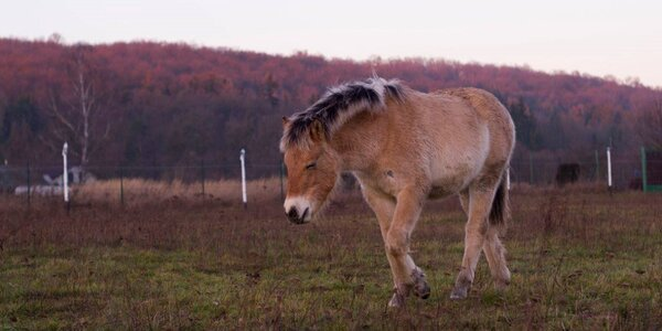 Novoroční vyjížďka na koních, kteří to nemají lehké
