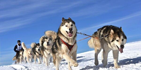 Jízda se psím spřežením krásnou krajinou Krkonoš