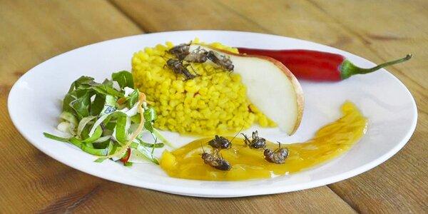 Zážitkový kurz vaření: 5chodové hmyzí menu