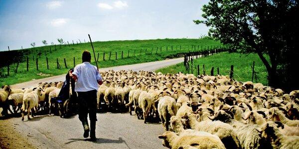 Rumunský Banát s ubytováním u krajanů i jídlem