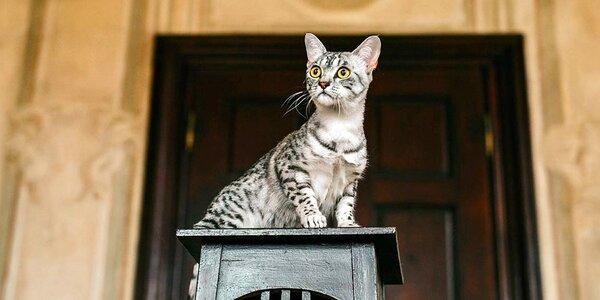 Vstupenka na výstavu koček nebo kočičí kalendář